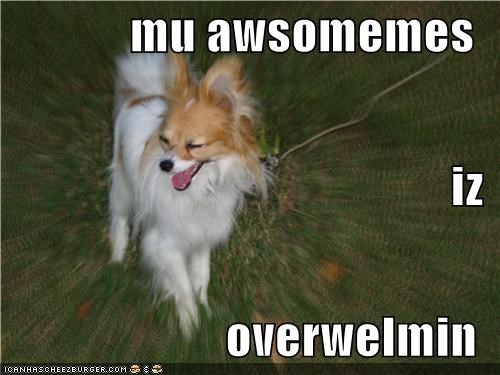 awesome awesomeness happy happy dog overwhelming papillon smile smiles smiling - 5189205504