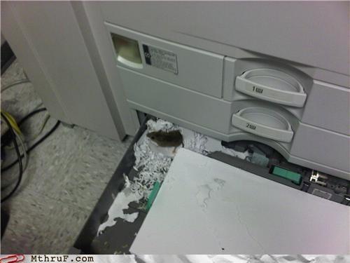 mouse pets printer - 5189401088