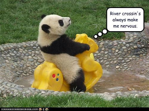 animals,I Can Has Cheezburger,nervous,panda bears,panda,riding,river crossing,rivers,toys,water