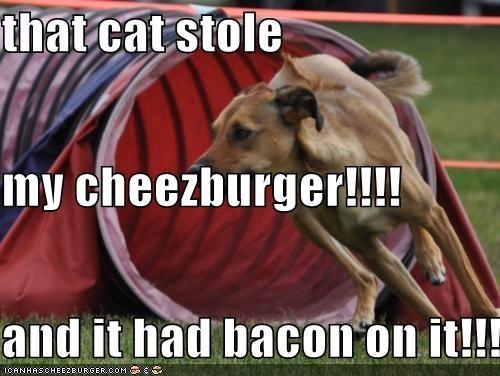 Cheezburger Image 5191523584