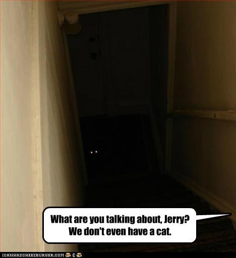 about caption captioned cat creepy darkness dont even eyes have question silhouette Staring talking what - 5191793408