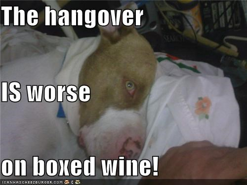 The hangover IS worse on boxed wine! - Cheezburger - Funny