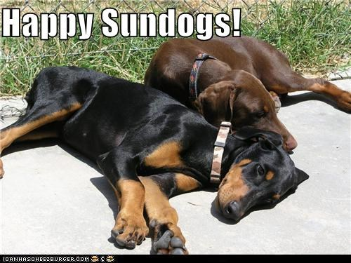 doberman pinscher,friends,happy sundog,Sundog
