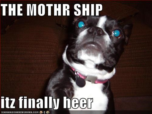 Aliens,boston terrier,mother ship,outer space