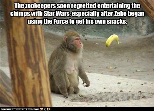 funny I Can Has Cheezburger monkey - 5193947136