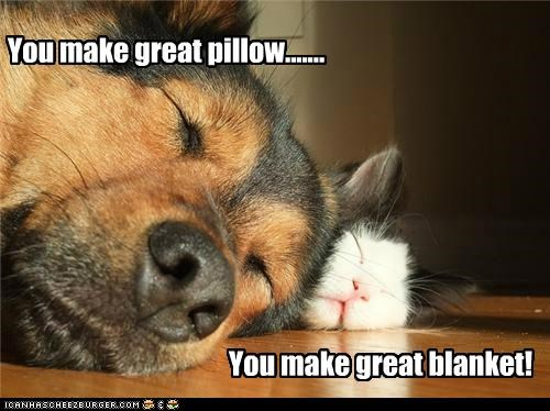 You make great pillow....... You make great blanket!