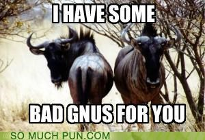 bad,bad news,gnu,gnus,homophone,knew,literalism,news