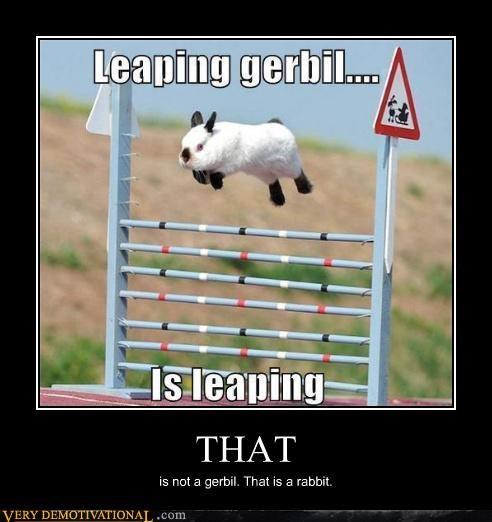 gerbil hilarious rabbit wrong - 5194329600