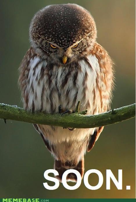 anger animals animemes birds cute IRL Owl SOON
