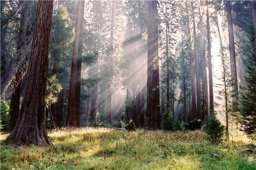 california Forest getaways north america sequoia national park trees united states user submitted - 5195037696