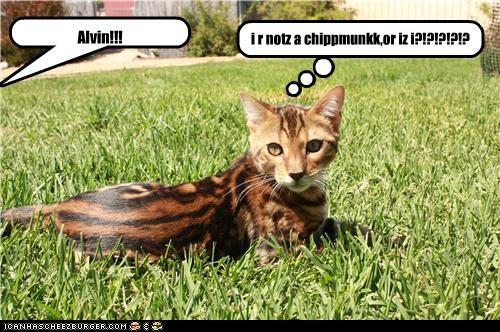 Cheezburger Image 5195216128