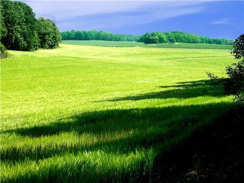 europe field field of green getaways grass green scandinavia Sweden trees - 5195777536
