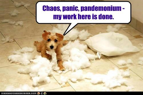 chaos destruction mess messy mixed breed pandemonium panic Pillow terrier whatbreed work