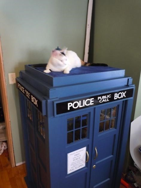 cat tardis,Cats,doctor who,kitteh,tardis,tardis replica,Toyz,tv shows