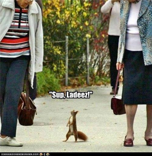 animals flirting I Can Has Cheezburger ladies squirrels sup - 5196386816