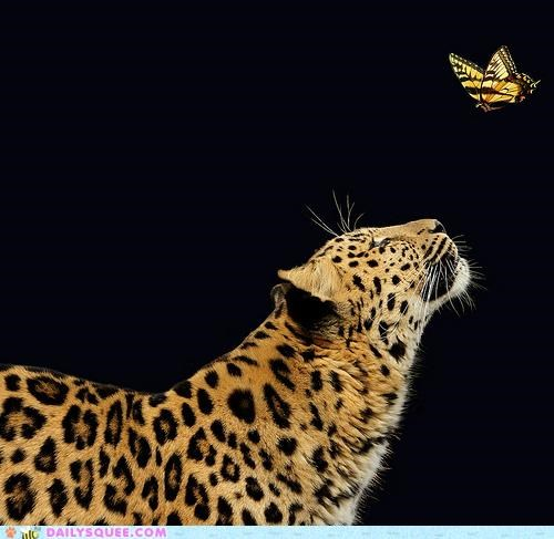 acting like animals agreement bargaining butterfly diplomacy Hall of Fame leopard monarchy negotiating negotiations Staring - 5196884224
