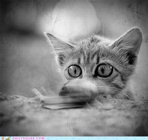 acting like animals cat explanation idiom kitten ninja - 5196995840