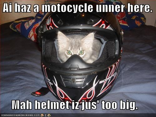 big caption captioned cat excuse explanation helmet here i has kitten motorcycle too under - 5197067264