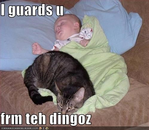 baby dingos guarding lolcats sleeping true stories - 519719168