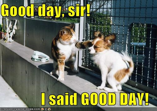 animals Cats dogs fighting good day I Can Has Cheezburger Interspecies Love slap slapping - 5197491712