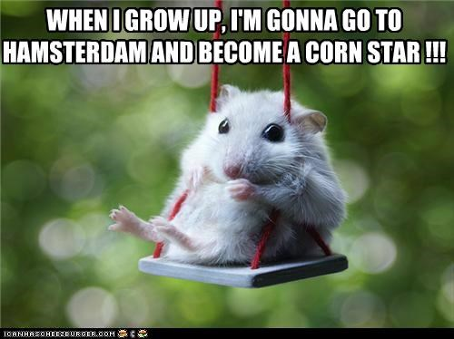 Amsterdam animals best of the week caption captioned cute Hall of Fame hamster hamsters I Can Has Cheezburger just capshunz pr0n puns rodents swing - 5197814784