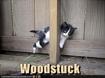 caption captioned cat kitten pun similar sounding stuck suffix wood woodstock - 5197886976