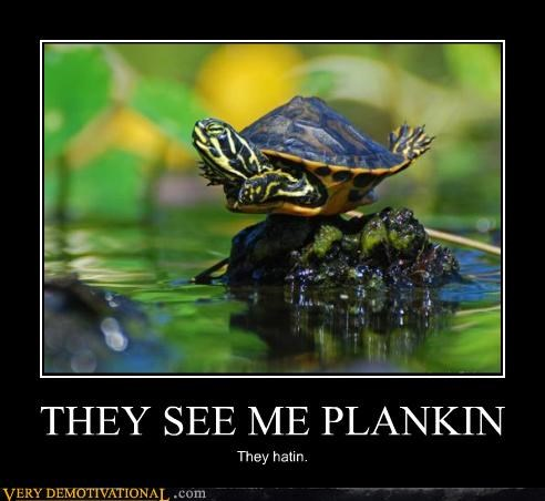animals hilarious Planking turtle wtf - 5198161152