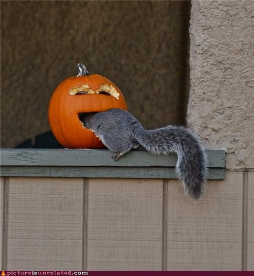 best of week food pumpkins squirrel wtf - 5198228224