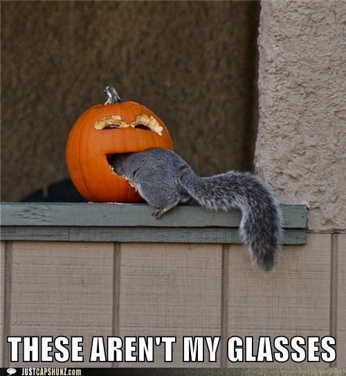 animals glasses I Can Has Cheezburger pumpkins squirrels these-arent-my-glasses - 5198230784