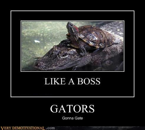 aligator haters hilarious turtle - 5198363648