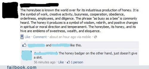 bees,honey badger,Video