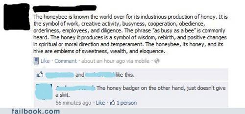 bees honey badger Video - 5198601216