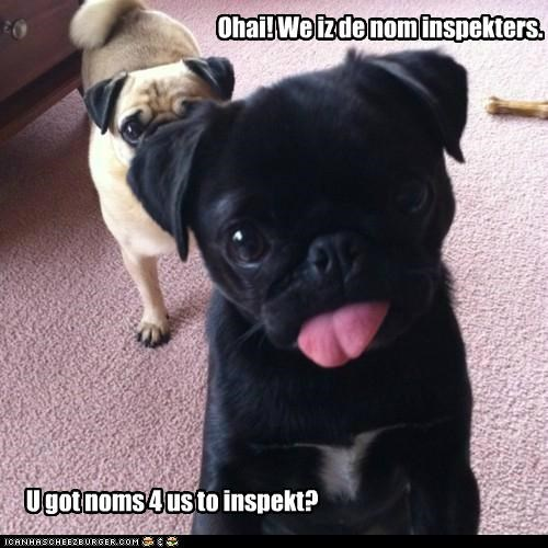 food,inspection,inspector,nom inspectors,noms,pug,pugs,tongue