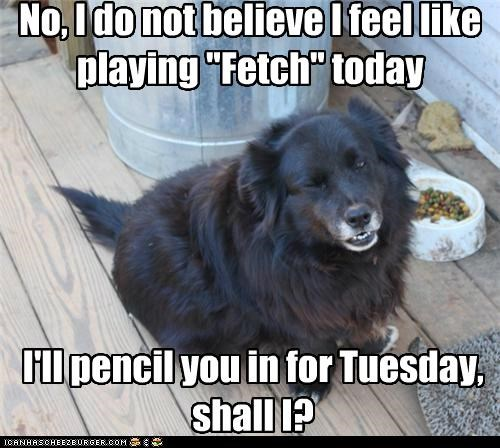 best of the week,do not want,fetch,mixed breed,no,shall I,tuesday,whatbreed