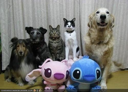 dogs,family,goggies,goggies r owr friends,Interspecies Love,lilo and stitch,portraits,posed,stuffed animals,together
