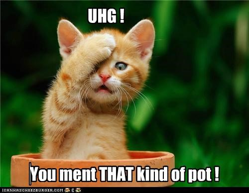 You ment THAT kind of pot ! UHG !