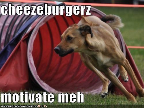 Cheezburger Image 5199522048