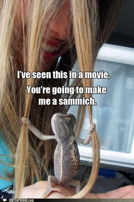 chameleon,controlling,disney,food,hair,I Can Has Cheezburger,movies,ratatouille,reptiles,sammich