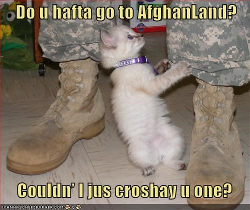 adorable afghan best of the week caption captioned cat confused crochet Hall of Fame kitten knitting land misunderstanding question saccharine - 5199622656