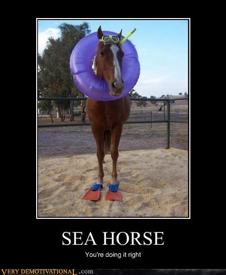 SEA HORSE You're doing it right