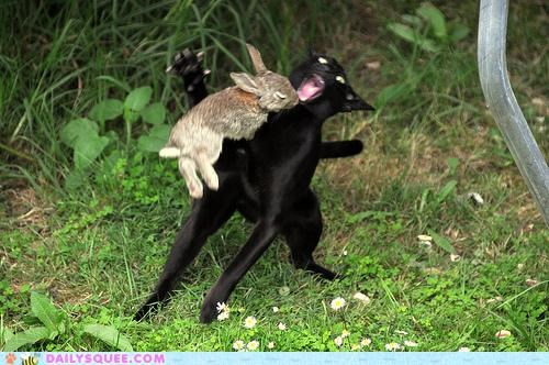 acting like animals attacked bunny cat evil Hall of Fame holy hand grenade monty python monty python and the holy grail rabbit - 5200272896