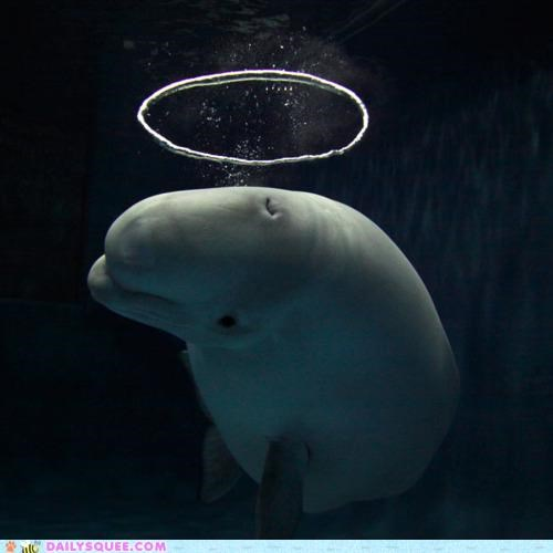 acting like animals angel beluga whale bubble bubbles halo heaven resemblance ring - 5200293888