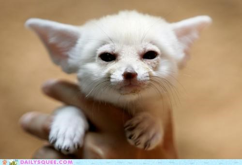 adorable baby cranky cute denied expression face failing fennec fennec fox grumpy Hall of Fame held ineffective request