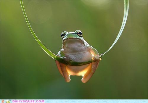 flora frog grabbing Hall of Fame hammock hanging literalism multipurpose plant pun same difference trapeze - 5200320000