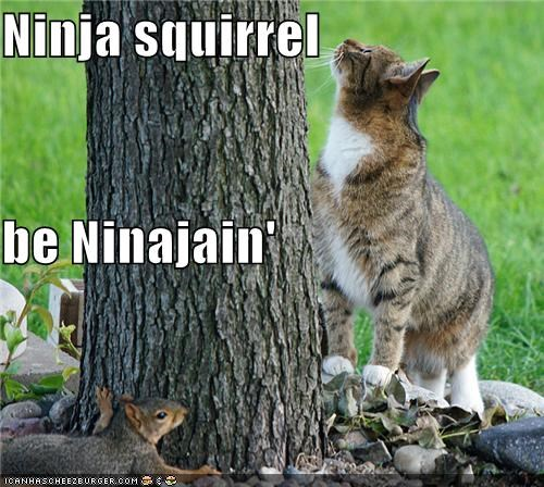 action caption captioned cat hiding ninja noun squirrel verb - 5200892672
