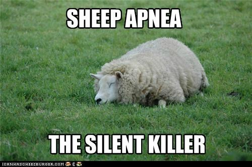 What Do Sheep Count When They Go To Sleep?