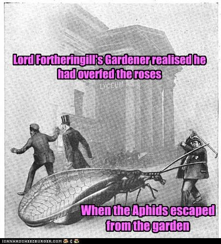 Lord Fortheringill's Gardener realised he had overfed the roses When the Aphids escaped from the garden