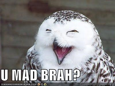 animals,birds,bros,I Can Has Cheezburger,Memes,owls,u mad