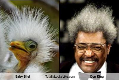 baby bird,bird,crazy hair,Don King,white hair