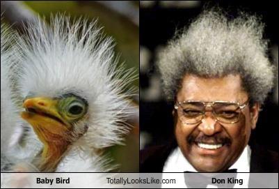 baby bird bird crazy hair Don King white hair - 5202560512